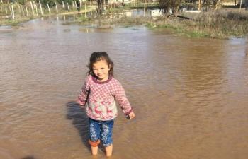 Aşırı yağış sele neden oldu