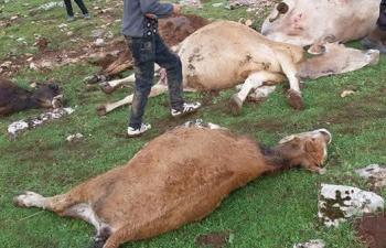 Hayvanları telef olan köylüler yardım bekliyor