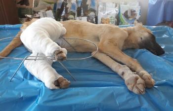Mardin'de hayvanlara 5 yıldızlı hizmet