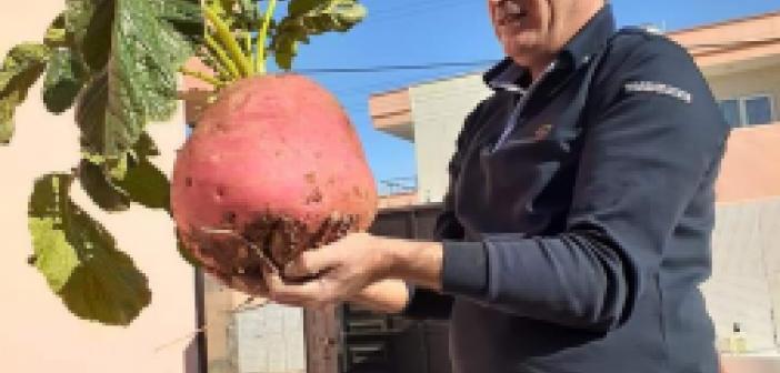 Kızıltepeli çiftçi 8 kiloluk trup yetiştirdi