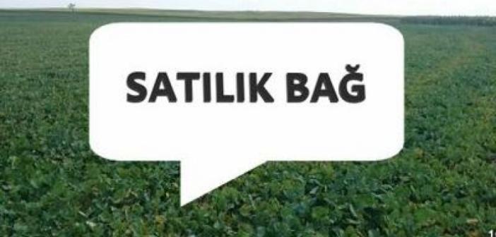 Mardin Ömerli'de 21.770,56 m² bağ satılıktır
