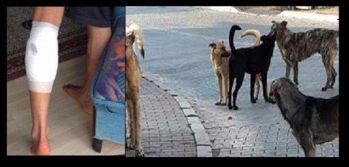 Saldırgan Sokak köpekleri bu sefer Ömerli'de bir vatandaşa saldırdı