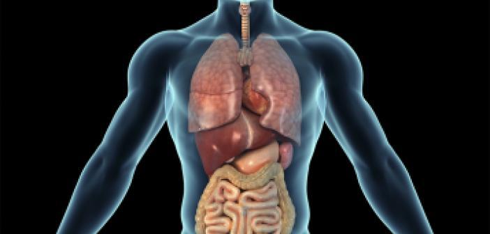 Kürtçe Organ ne demek? Kürtçe Organ İsimleri Nelerdir? Organ Kürtçe
