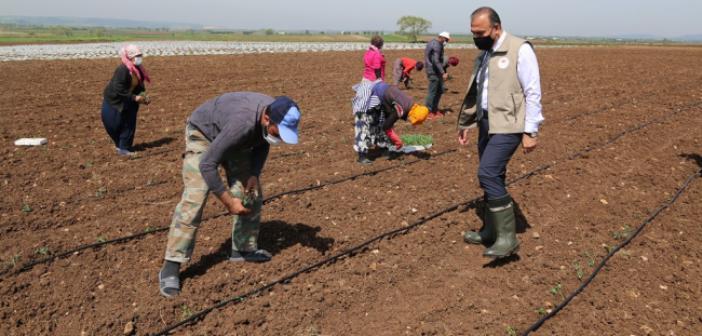 Mevsimlik tarım işçileri Bursa'ya gitti