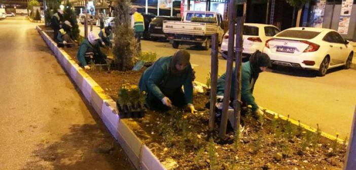 Kızıltepe Orta Refüjleri Süsleniyor