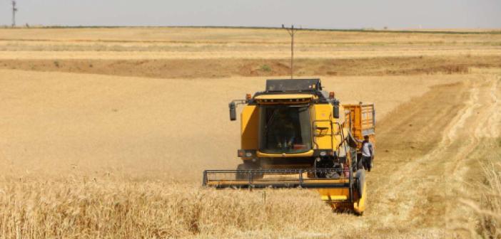 Kuraklıktan olumsuz etkilenen çiftçinin yüzü sulu buğdayda güldü
