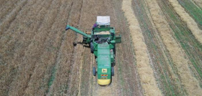 Mardin'de 800 bin ton buğday üretildi