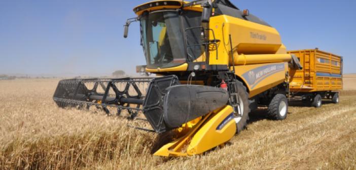 Mardin'de sulu buğdayda verim artışı çiftçiyi sevindirdi