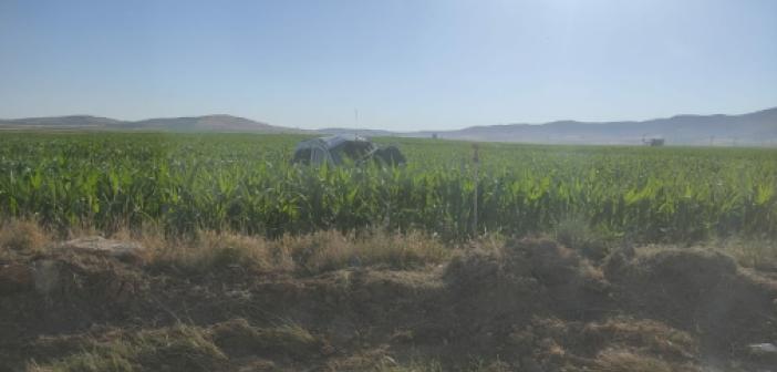 Mardin'de takla atarak mısır tarlasında devrilen araçta 1'i ağır, 4 kişi yaralandı