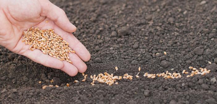 Mazıdağı'nda tohum ve fidan başvuruları başladı
