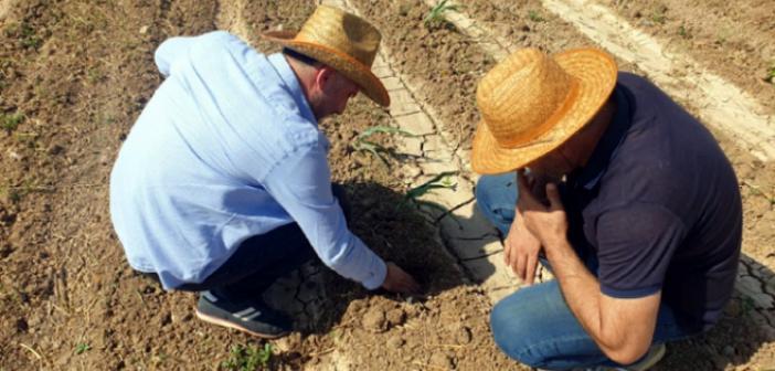 Mısır ekili arazilerde kontroller yapıldı