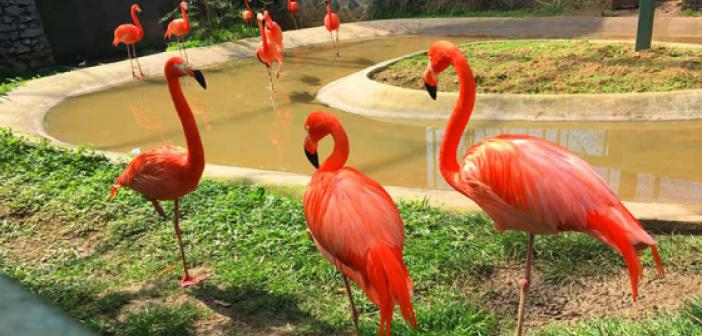 Rüyada Hayvanat Bahçesi Görmek ne demek? Rüyada Hayvanat Bahçesinde olduğunu Görmek ne anlama gelir?