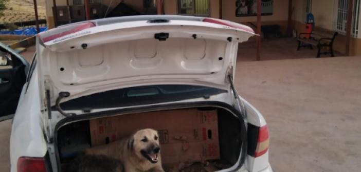 Yaralı köpeği aracına alıp tedaviye götürdü, kimseyi bulamadı!