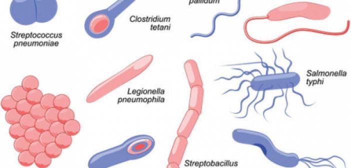 Bakteri nedir, bakteriler nerede yaşarlar? TDK'ya göre bakteri ne anlama geliyor? Etimolojik kökeni nedir?