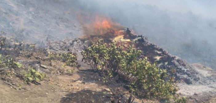 Bitlis'in Mutki ilçesinde çıkan orman yangınına müdahale ediliyor