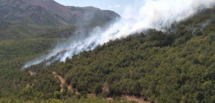 Bitlis'in Mutki ilçesinde çıkan yangın kontrol altına alındı