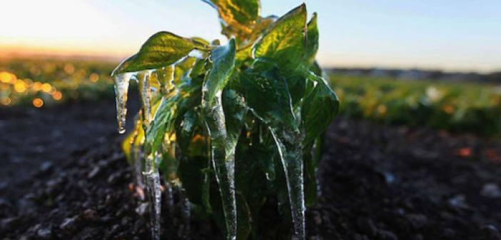 Meteorolojiden bazı bölgeler için zirai don ile sağanak yağış uyarısı
